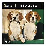 National Geographic Beagles 2021 Wall Calendar