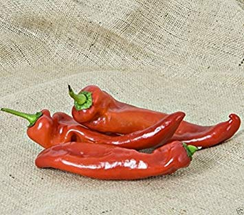 10+ seeds Sweet Kalocsai Spice Pepper ORIGINAL HUNGARIAN!