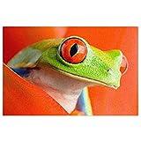 DLJIYZX Felpudo Red Eyes Tree Frogs Alfombrillas de Entrada Alfombra Antideslizante de PVC Alfombra de Cocina Alfombra de baño Alfombra Alfombra 40X60CM