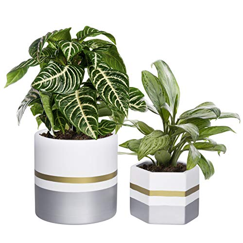 6.5 Inches Pack of 2 White Ceramic Flower Pot Indoor Planters for Plants, with Drainage Hole, Gold Trim and Silver Detailing, by D'vine Dev