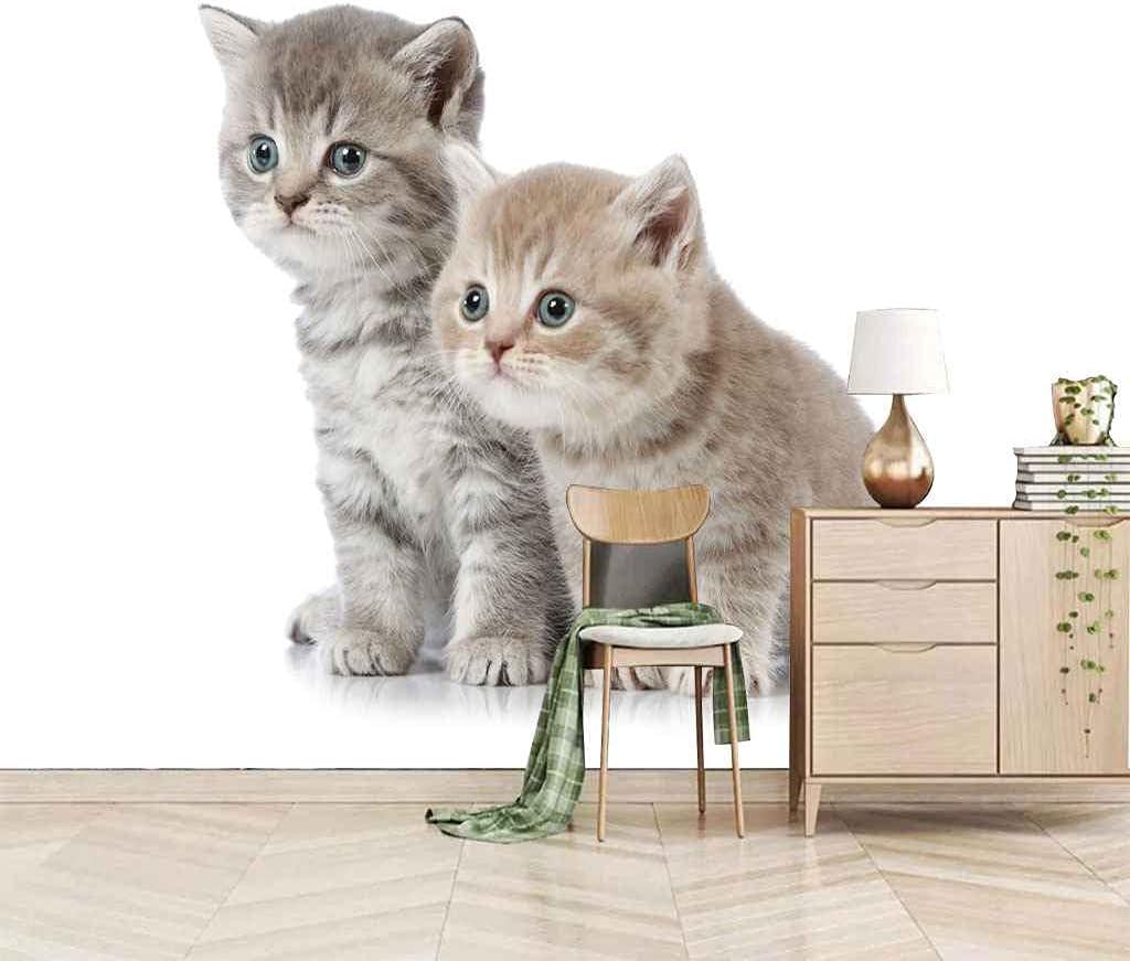 FVGKYS Wall Decals Art 3D Popular Custom Poster Patt Mural Animal Kitten Sales of SALE items from new works