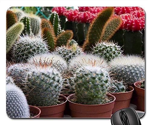 Preisvergleich Produktbild Mausepad Mini Cactus Spike Pflanzen Topf Kaktus Garten Grün Gedruckt Langlebig Rutschfest 25X30Cm Tastatur Schreibtisch Computer Laptop Standardgröße Tabelle Büro Gummi Spielmatte