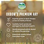 Petlife Oxbow Orchard Grass Hay for Small Pet, 1.13 kg 12