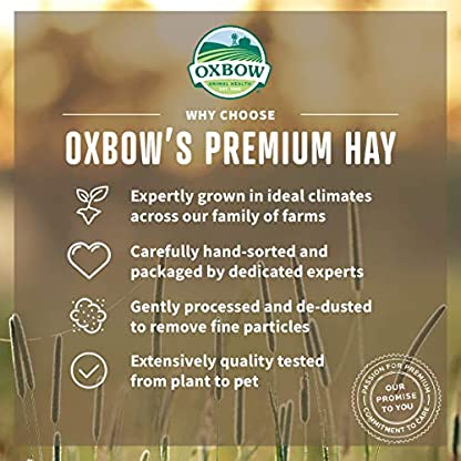 Petlife Oxbow Orchard Grass Hay for Small Pet, 1.13 kg 5