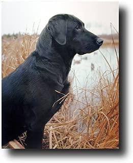 Hunting Black Labrador Dog Animal Wall Decor Art Print Poster (16x20)