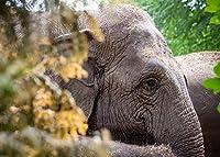 古典的なパズル12歳以上の人々に適した木製の動物の森の象の500個