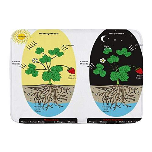 AoLismini Badematte Teppich, Photosynthese Zellatmung Pflanze Dew Du Science Vergleich Bildung, rutschfeste saugfähige ultraweiche Badezimmer Dr. Mats
