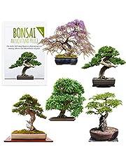 Exotische Bonsai Zaden met hoge kiemkracht - Plantenzaden set voor je eigen Bonsai Boom (Set van 5 inclusief GRATIS eBook)