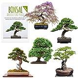 Semi Bonsai rari con alta velocità di germinazione - Set di semi per il proprio albero bonsai (Mix di 5 incl. eBook GRATIS)