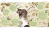 Ratten: So fühlen sich die Kletterkünstler rundum wohl (GU Tierratgeber) - 8