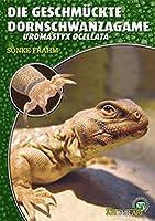 Die Geschmueckte Dornschwanzagame: Uromastyx Ocellata. Art fuer Art