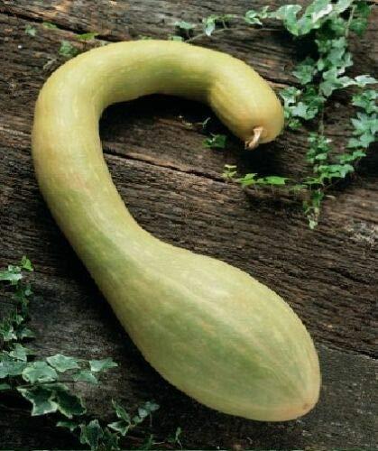 Fulazov - Graines - Légumes - Courgette - Tromboncino...