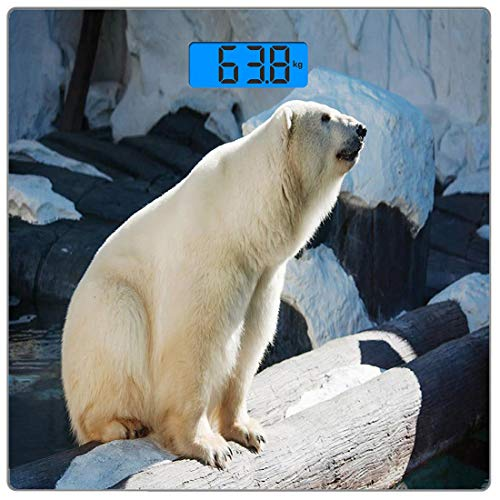 Escala digital de peso corporal de precisión Square zoo Báscula de baño de vidrio templado ultra delgado Mediciones de peso precisas,Parque de Vida Silvestre Oso Polar Rocas Agua Clima Frío Imagen de