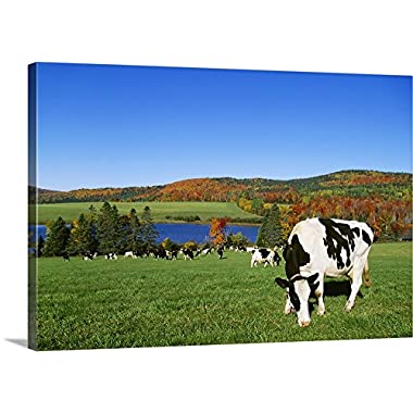 Lynn Stone Premium Thick-Wrap Canvas Wall Art Print entitled Holstein dairy cows grazing in a pasture with a lake and Fall colors in the background 24 x16