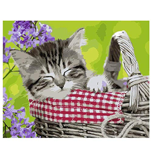 MYYDM Kit de Pintura al óleo de Bricolaje Pintura de Gato por números para Adultos niños con Pinceles y Pigmento acrílico 16 x 20 Pulgadas (sin Marco)