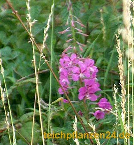 Mühlan - 20 wurzelnackte Pflanzen für die Bepflanzung der Sumpfzone und das Teichufer, mindestens 5 Sorten, winterhart