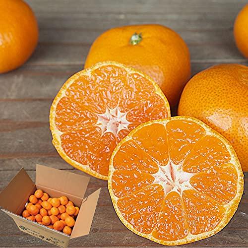 伊藤農園 有田みかん 訳あり 傷有り サイズ不選別 3L 2L L S SS 2kg ミカン家庭用 果物 柑橘 和歌山