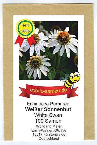 Weißer Sonnenhut - Echinacea purpurea -...