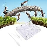 Ant farm - caja de cría de hormigas de acrílico transparente para insectos villa de cría de hormigas, casa de cría de hormigas, nido de hormigas, regalo de cumpleaños