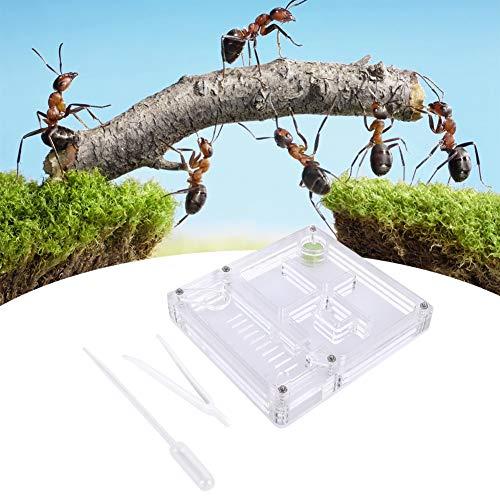 Ameisenfarm Acryl Ameisenzuchtbox Transparente Insektenvitrine Ameisenzuchtbox Ameisenfutterbox Farm Insect Villa Ant Nest Geburtstagsgeschenk Geschenk