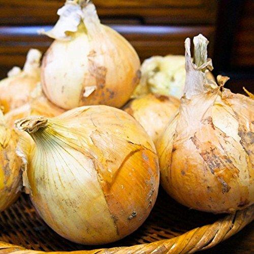 玉ねぎ 玉ネギ無農薬 淡路の無農薬玉ねぎ5�s プロの折り紙付き 有機栽培歴30余年 在宅食 日持ち 乾燥玉ねぎ 甘み旨味最高