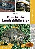 Griechische Landschildkröten: Pflege und Vermehrung