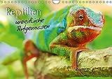 Reptilien urzeitliche Artgenossen (Wandkalender 2017 DIN A4 quer): Ein Muss für jeden Terrarianer...