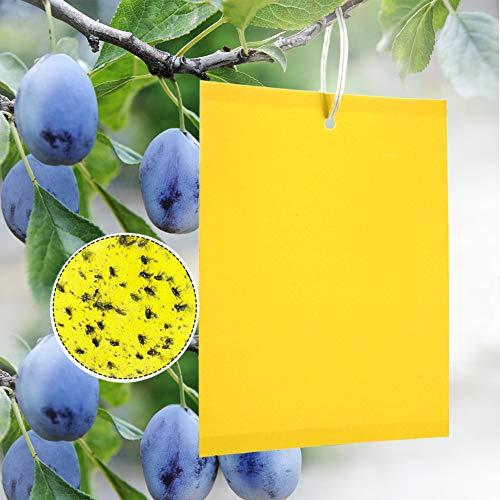 Panngu 20 Stück Gelb-Sticker, Gelbfalle Fliegenfalle für Gartenarbeit Pflanzenschutz Und Schädlingsbekämpfung