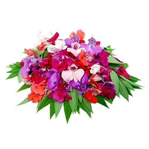 XINDUO Samen fü Blumen,Indoor Balkon Impatiens Pflanze Blumenart-rot_100,Frühling Blumen mehrjährig winterhart