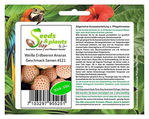 Stk - 100x Weiße Erdbeeren Ananas Geschmack Obst Pflanzen - Samen #121 - Seeds Plants Shop Samenbank Pfullingen Patrik Ipsa