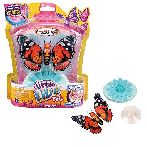 Petits Animaux vivants Mon papillon - Ailes Wicked
