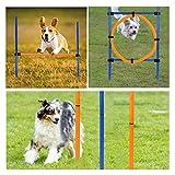 Set De Entrenamiento Agilidad Perros Jump Hoop Dog Agility Starter Equipment Juego Ajustable con Valla con Bolsa Transporte