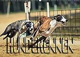 Hunderennen (Wandkalender 2022 DIN A2 quer)