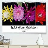 Epiphyllum-Hybriden (Premium, hochwertiger DIN A2 Wandkalender 2021, Kunstdruck in Hochglanz)