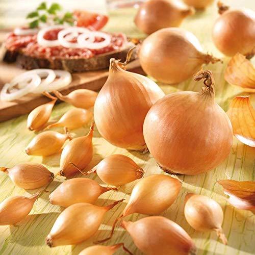 Soteer Garten - 100 Stück Steckzwiebeln Samen 'Echte Stuttgarter Riesen', mit pikant - kräftigem Aroma Speisezwiebel Samen Gemüsesaatgut für Garten Balkon/Terrasse