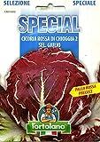 Sementi di ortaggi ibride e selezioni speciali ad uso amatoriale in buste termosaldate (80 varietà) (CICORIA ROSSA DI CHIOGGIA 2 SEL. GIULIO (PRECOCE))
