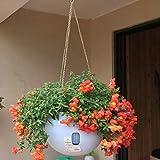 LXH-SH Distribucion de Herramientas de jardinería Macetas plásticas Colgantes Macetas macetas Colgantes con Cadena Colgante Entrega de Color al Azar