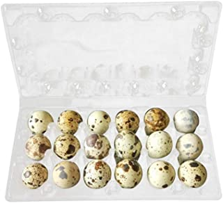 Amazon.es: Cajas y bandejas de huevos: Industria, empresas y ciencia