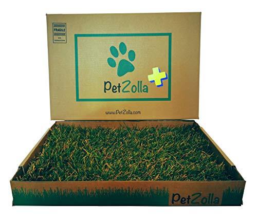 PetZolla Plus 60x40cm: Lettiera in Vera Erba + Guanti + Sacchetto Biodegradabile + Trattamento con Attrattivo Naturale