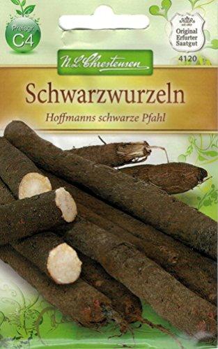 Chrestensen Schwarzwurzeln 'Hoffmanns schwarze Pfahl'