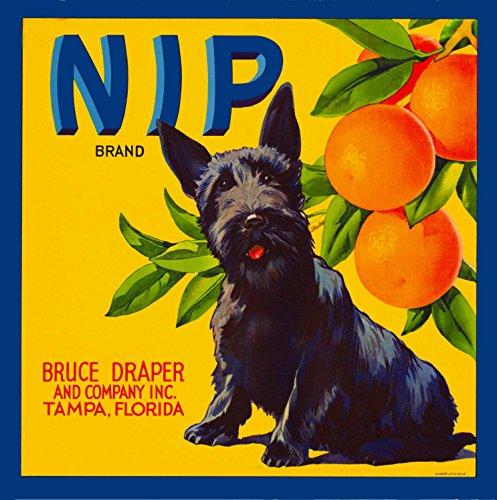 A SLICE IN TIME Tampa Florida Nip Scottish Terrier Puppy Dog Orange Citrus Fruit Crate Label Art Print
