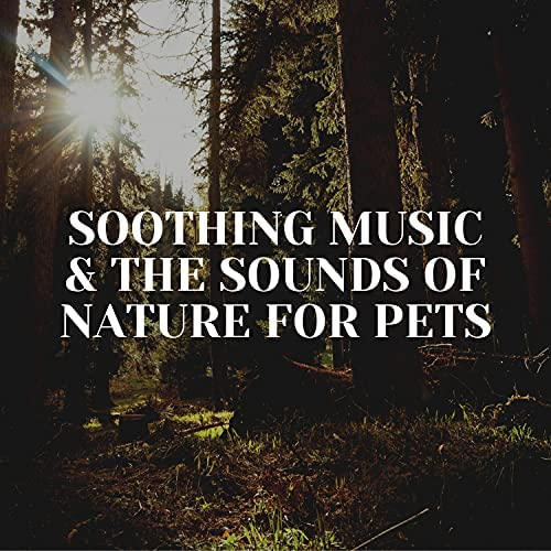 Relaxing Piano For Pets