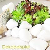 MGS SHOP Dekokies Dekosteine Streudeko Kies – Farbe wählbar (5 kg, Schneeweiß 15-25) - 3
