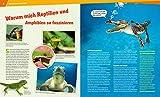 20 Reptilien und Amphibien. Gecko, Grasfrosch und Waran - 5