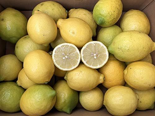 レモン3kg福岡県産無農薬防腐剤防かび剤ワックス不使用