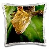 3dRose pc 84106 1 New Caledonian Crested Gecko lizard-NA02 MPR0089-Maresa Pryor-Pillow Case, 16