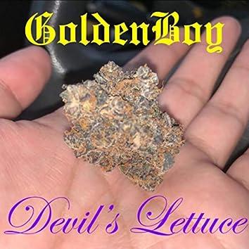 Devils Lettice