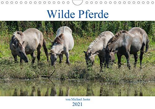 Wilde Pferde von Michael Jaster (Wandkalender 2021 DIN A4 quer)