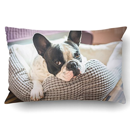 Emvency Queen Throw Waist Pillow Case 20x30 Inches Decorative Cushion Pillowcases Adorable French Bulldog on The lair Throw Pillow Cover with Hidden Zipper for Bedroom Decor Sofa Couch