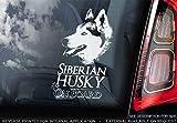 Sticker International Husky - Adhesivo Coche - Siberiano Perro Firmar Ventana, Parachoques Pegatina Regalo - V001 - Blanco/Claro - Externo Exterior Estampado, 185x100mm